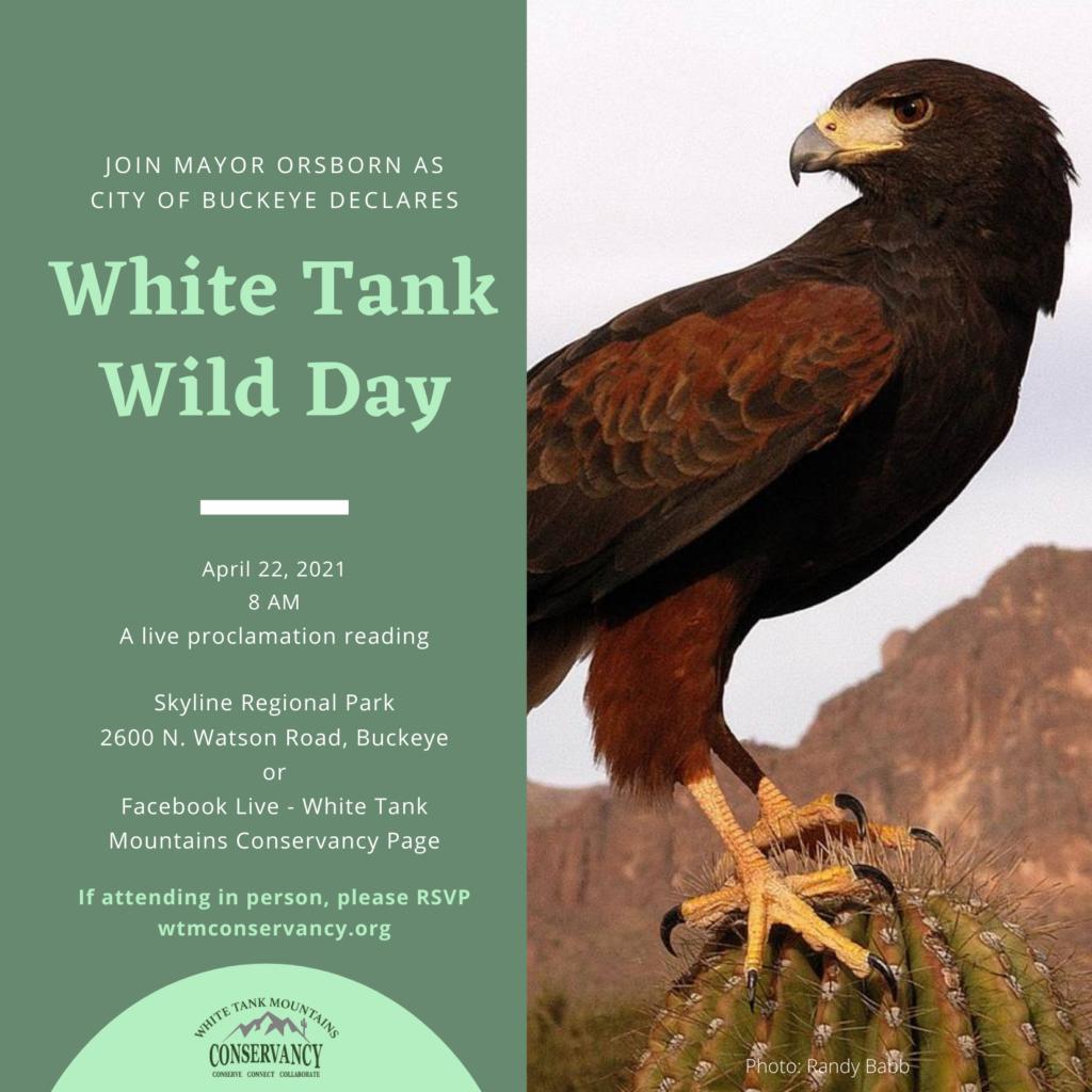 White Tank Wild Day